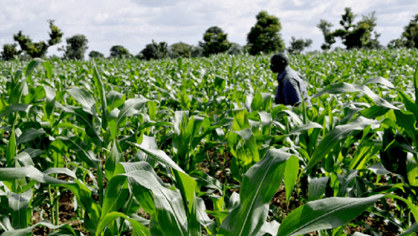 agribusiness or subsistence farming essay Primary activities: agriculture • def : growing crops and tending livestock, for sale or subsistence • 10% of the total earth land is for crop farming.