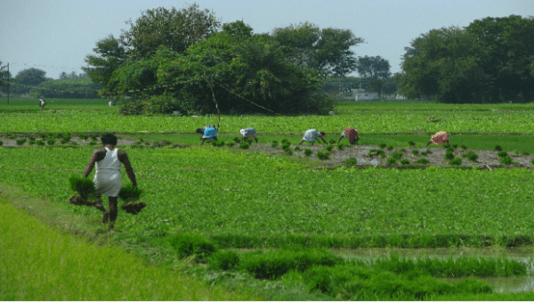 World Bank says Agriculture is biggest employer of labour ...