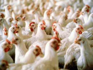 FG, Tuns Farms sign N25 billion pact on egg production