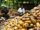 Early rainfall to boost Nigeria's cocoa production