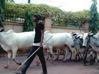Farmers sue Fulani herdsmen for N100bn In Benue