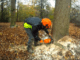 Felling of trees for financial gain, crime against nature