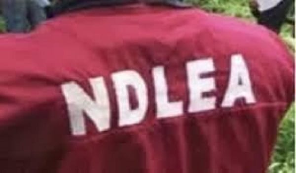 NDLEA to collaborate with BDCs against money laundering