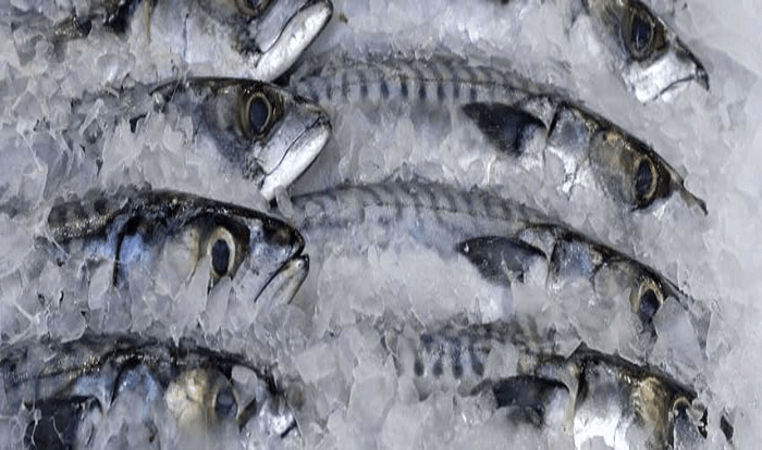 Fg warns of smuggled harmful frozen fish financial watch for How to freeze fish