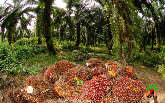 support palm oil farmers