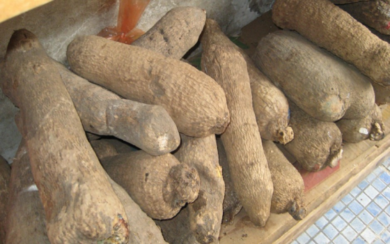 Nigeria's Yam farmers assure of increased production