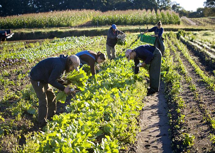 COVID-19 lockdown: FG classifies Farmers as essential workers