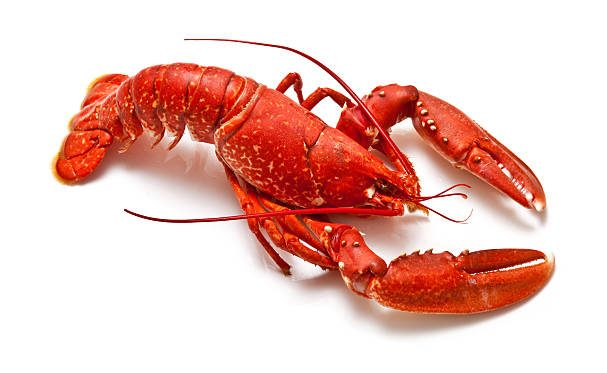 Lobby Lobsters NFT drop raises 4 million in one hour to support DeFi lobbying efforts